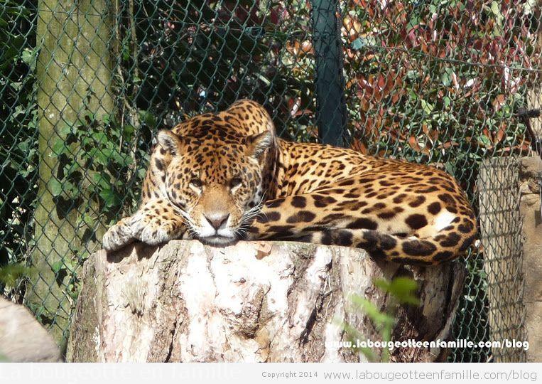 Visiter le zoo de beauval avec des enfants les animaux for Chambre zoo de beauval