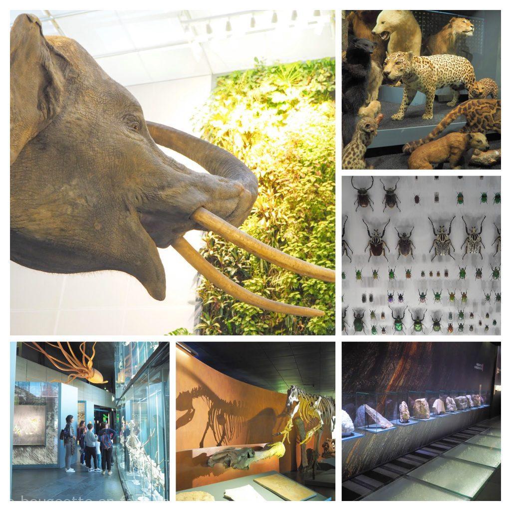 museum-histoire-naturelle-toulouse-visite-famille