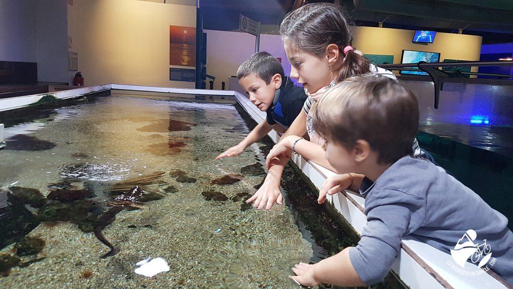 seaquarium-bassin-caresse-enfants