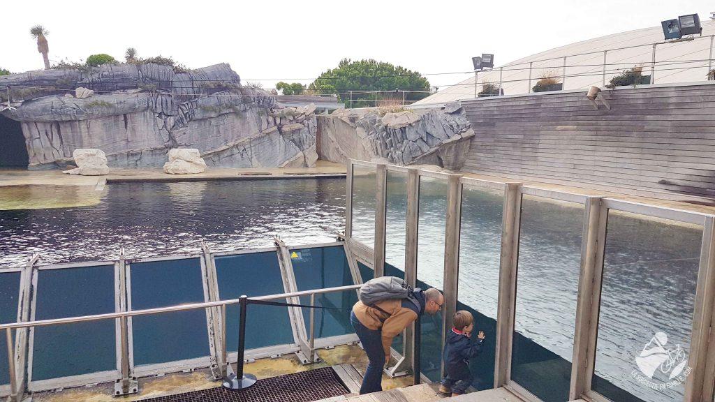 seaquarium-bassin-otarie-phoque