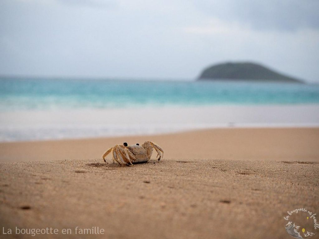 guadeloupe-crabe-plage