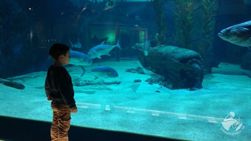 seaquarium-grau-du-roi-enfant-aquarium