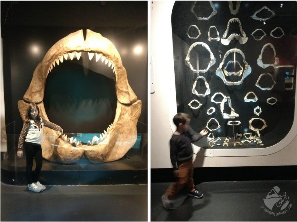 seaquarium-grau-du-roi-enfants-dents-requins