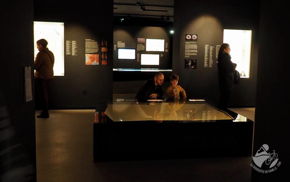 musée de lodeve enfant papa famille vitrine visite préhistoire