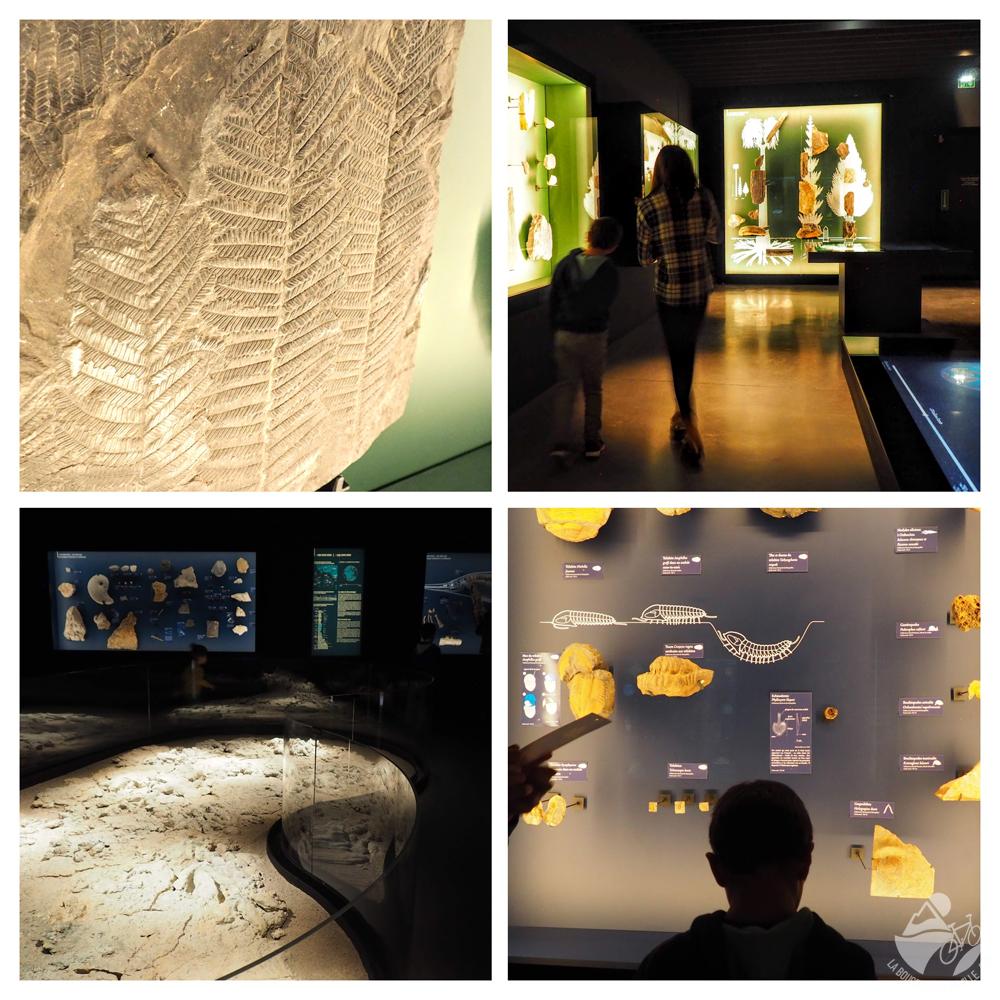 visite musée de lodeve vitrine prehistoire enfant